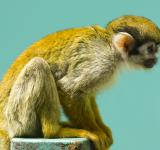 Free Photo - Monkey in the Zoo