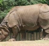 Free Photo - Rhino in the Zoo