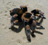 Free Photo - Spider on the Sand