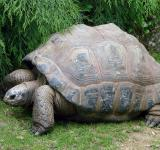 Free Photo - Old Tortoise