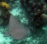 Free Photo - Sting Ray