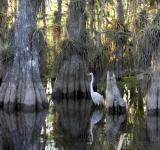 Free Photo - Swamp in the Water
