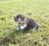 Free Photo - Little Kitten