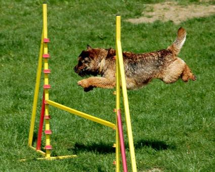 Dog Passing Obstacles - Free Stock Photo