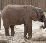 Free Photo - Elephant in the Zoo