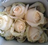 Free Photo - Bunch of White Rose Flowers