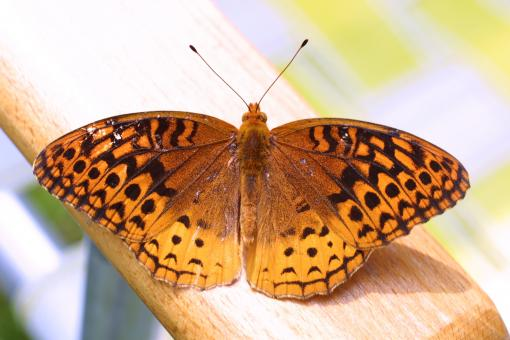 Butterfly on the Wood - Free Stock Photo
