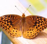 Free Photo - Butterfly on the Wood