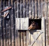 Free Photo - Horse Stable