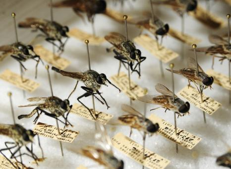 Types of Mosquitoes - Free Stock Photo