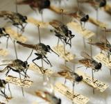 Free Photo - Types of Mosquitoes