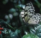 Free Photo - Rice paper Butterfly