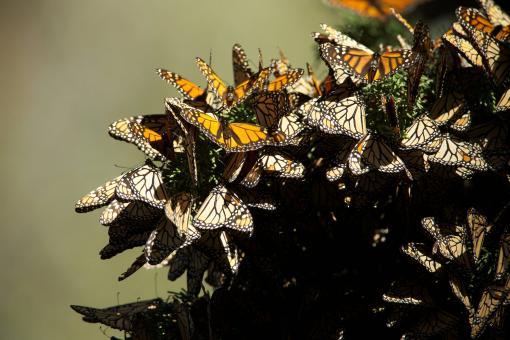 Group of Butterflies - Free Stock Photo