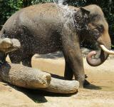 Free Photo - Elephants in the Jungle