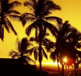 Free Photo - Palm Trees