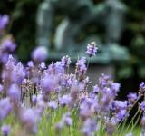Free Photo - Violet peace posture