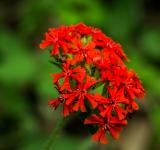 Free Photo - Red and Green