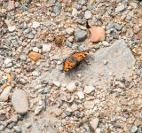 Free Photo - Butterfly on the rocks
