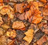 Free Photo - Drowning Autumn Decay - HDR