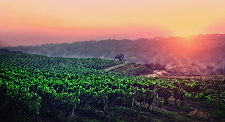 Free Stock Photo of A Vineyard in Central Portugal Created by Jack Moreh