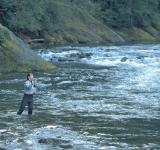 Free Photo - Fishing in the River