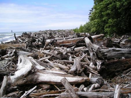 Log Jam - Free Stock Photo
