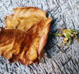 Free Photo - Dead Leaf and Flower