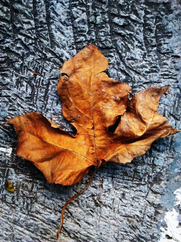 Free Stock Photo of The Dead Leaf Created by Berlian Dwi Kusuma