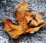 Free Photo - The Dead Leaf