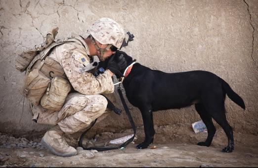Soldier with his Pet - Free Stock Photo