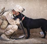 Free Photo - Soldier with his Pet