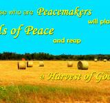 Free Photo - Seeds of Peace