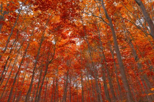 Ruby Fall Forest Foliage - HDR - Free Stock Photo