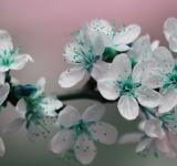Free Photo - Teal Blossom Flowers