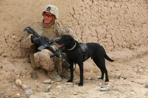 Solider with Dog - Free Stock Photo