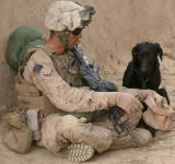 Free Photo - Solider with Dog