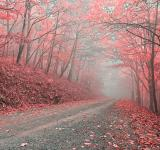 Free Photo - Misty Forest Road - Tickle Me Pink HDR