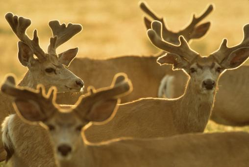 Group of Deers - Free Stock Photo