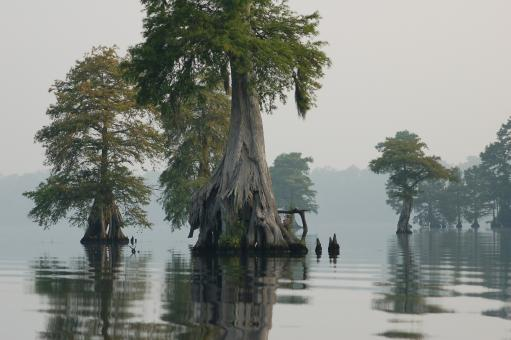 Great Dismal Swamp - Free Stock Photo