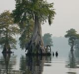 Free Photo - Great Dismal Swamp