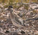 Free Photo - Road Runner