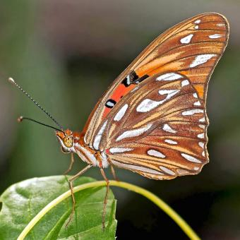 Brown Butterfly - Free Stock Photo