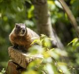 Free Photo - Marmot in the Jungle
