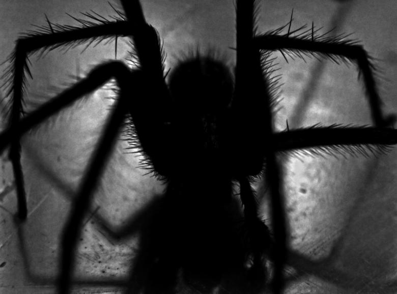 Free Stock Photo of Arachnophobia