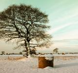 Free Photo - Snowy Hay Field