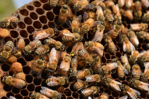 Group of Bees - Free Stock Photo