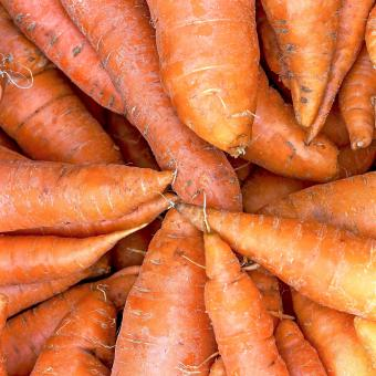 Bunch of Carrots - Free Stock Photo