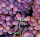 Free Photo - Fresh Grapes