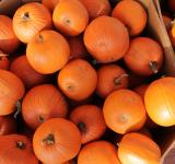 Free Photo - Fresh Pumpkins