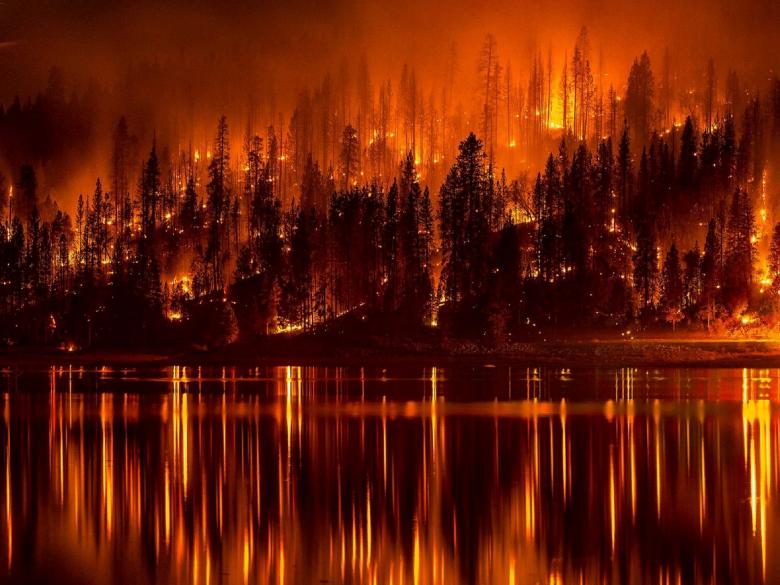 Forest Fire - Free Forest Stock Photos